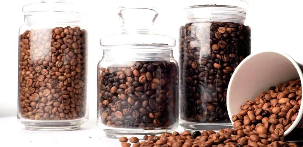 Арабика или робуста – что лучше, отличия во вкусе, что выбрать