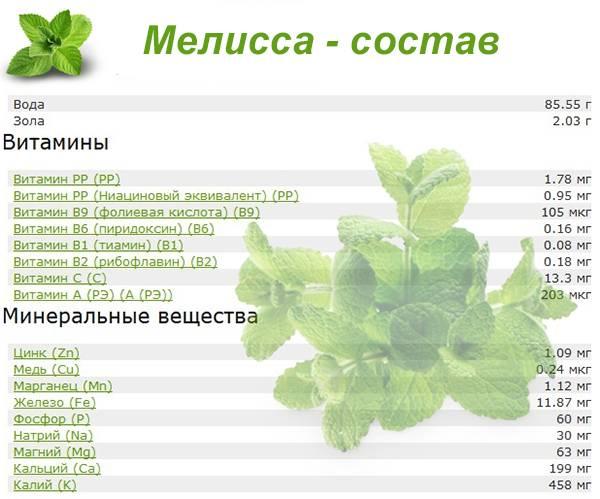 Чай с мятой - польза и вред для мужчин и женщин