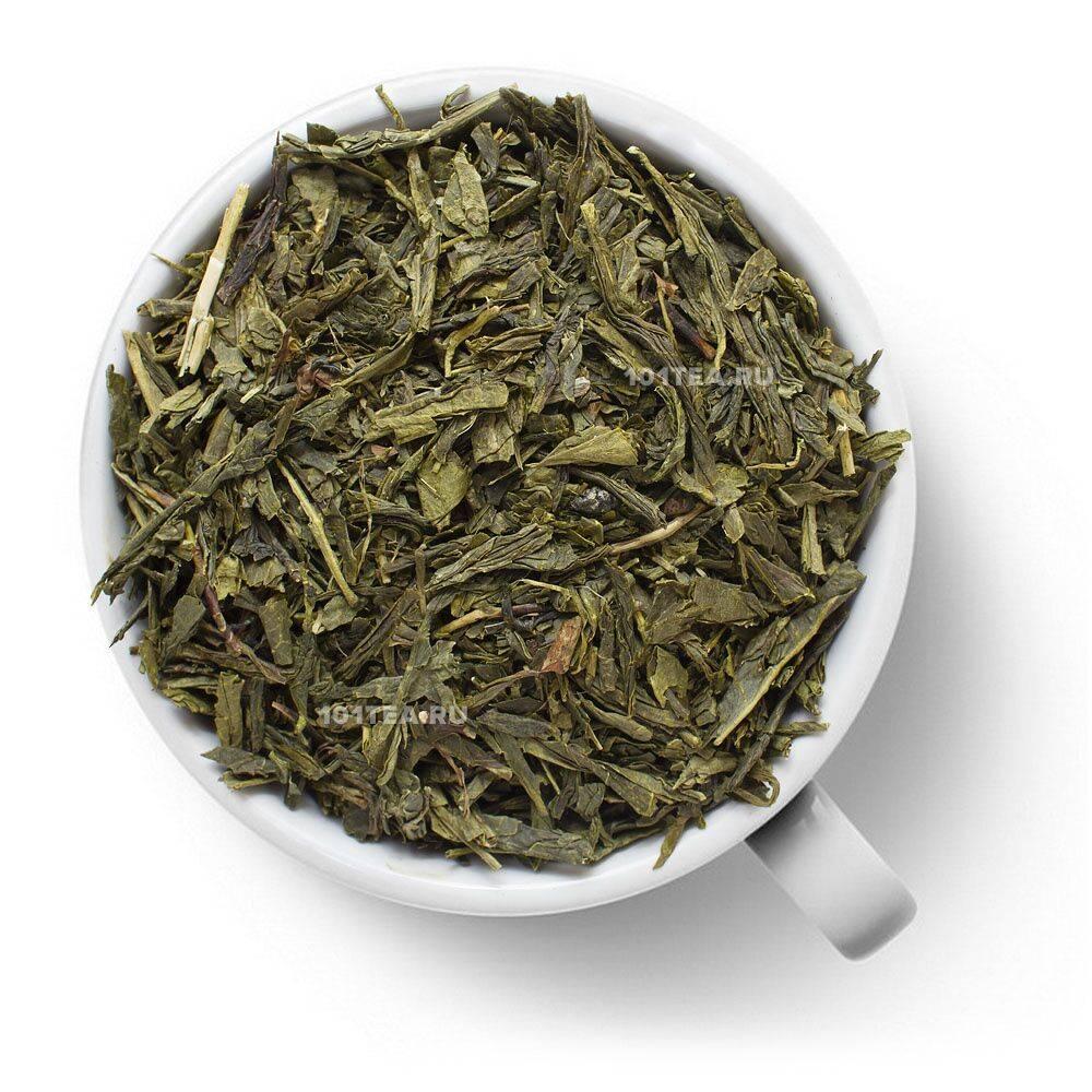 Зеленый чай сенча: описание, полезные свойства, приготовление