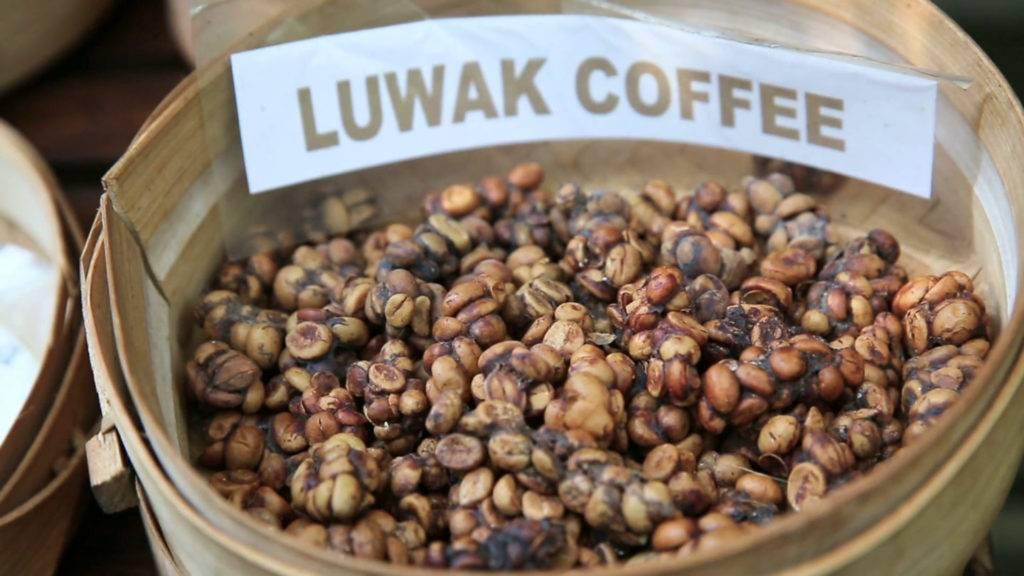 Кофе лювак (kopi luwak): описание, история и виды марки