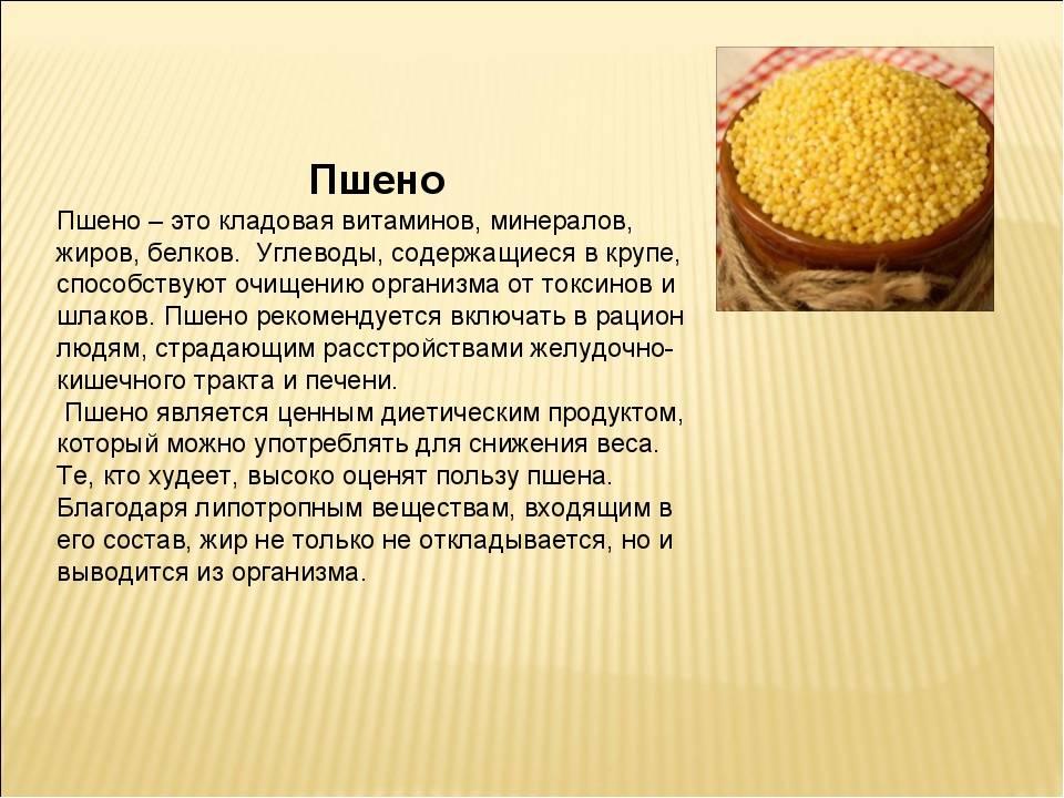 Пшенная каша: польза и вред для здоровья, состав и калорийность