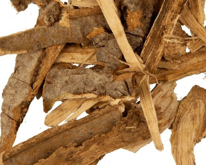 Кора осины от чего помогает, полезные свойства и противопоказания