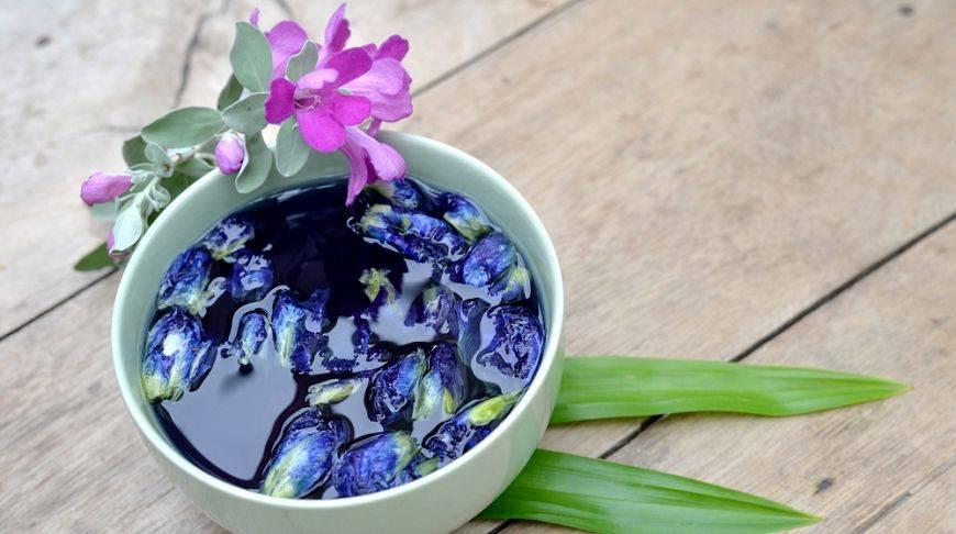 Синий чай из тайланда - свойства, происхождение, почему популярен