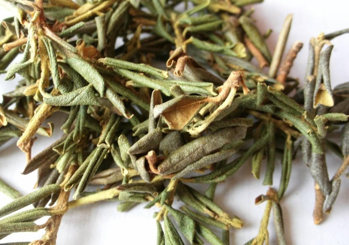 Саган дайля чай: полезные свойства для организма