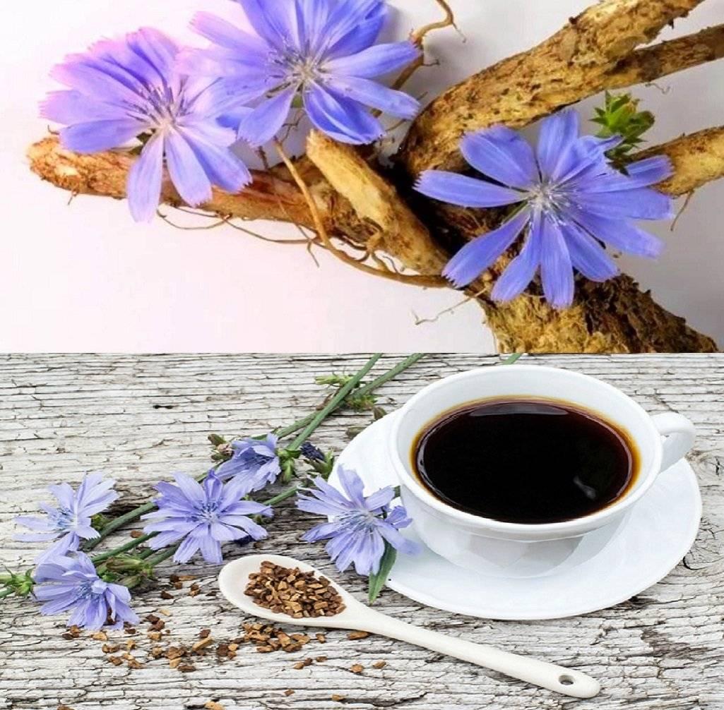 Цикорий, чай или кофе? почувствуйте разницу!