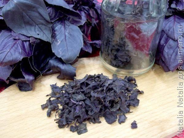 Как правильно сушить базилик – сушеный на зиму базилик в домашних условиях » сусеки