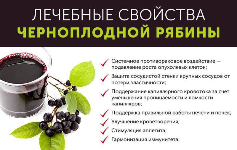 Арония, или рябина черноплодная: польза и вред, применение, рецепты