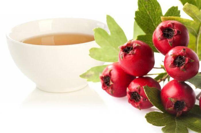 Рецепты чая из боярышника и его свойства