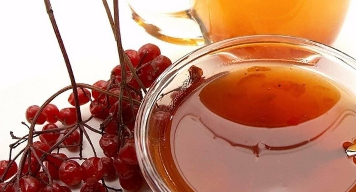 Чай с калиной - польза и вред для организма мужчины и женщины. полезные свойства и противопоказания