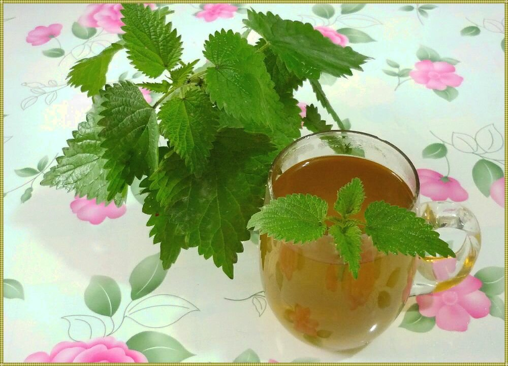 Нюансы употребления и рецепты приготовления чая из крапивы