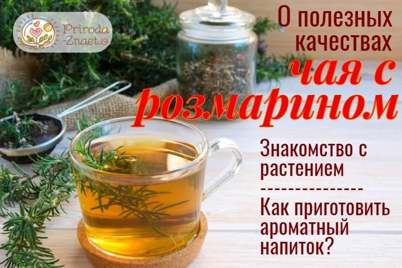 Чай с розмарином: полезные свойства и противопоказания