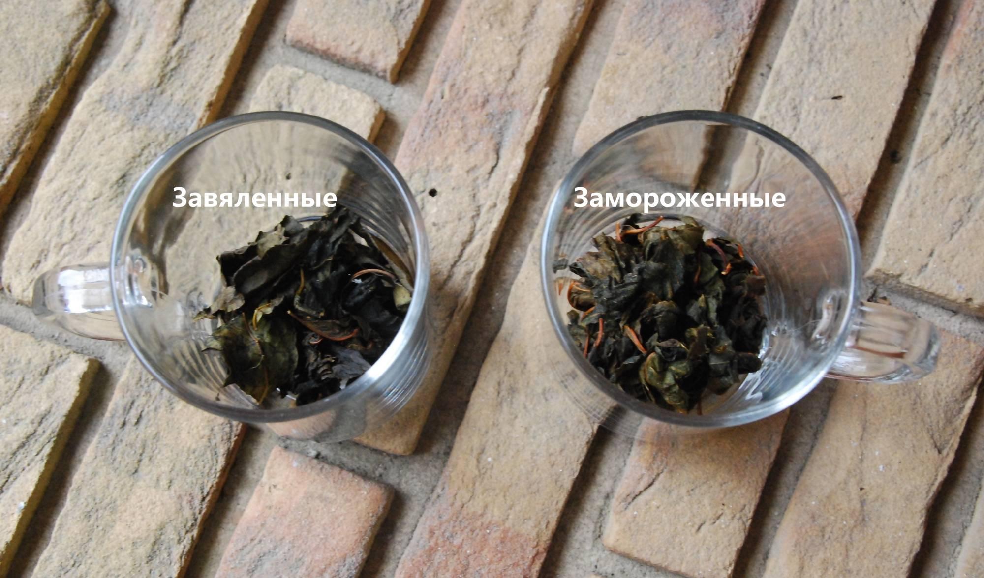 """Когда собирать листья вишни для чая? - журнал """"совхозик"""""""