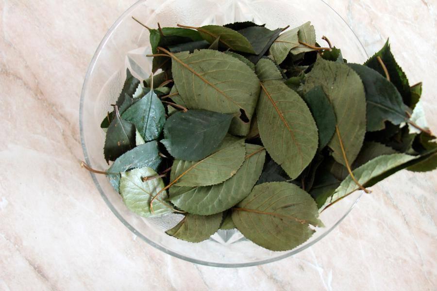 Чай из вишневых листьев (польза и правила ферментации)