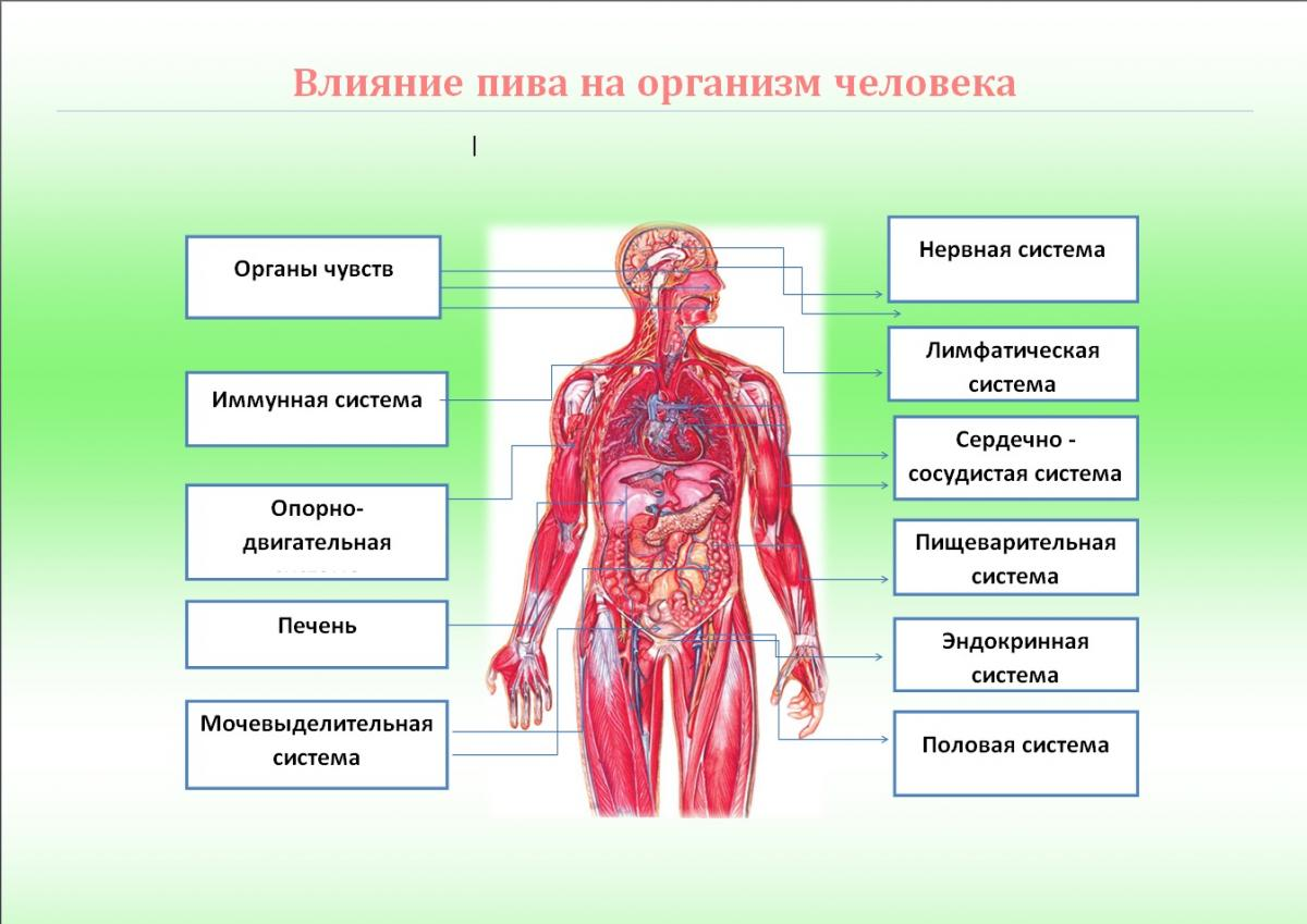 Влияние кофе на нервную систему