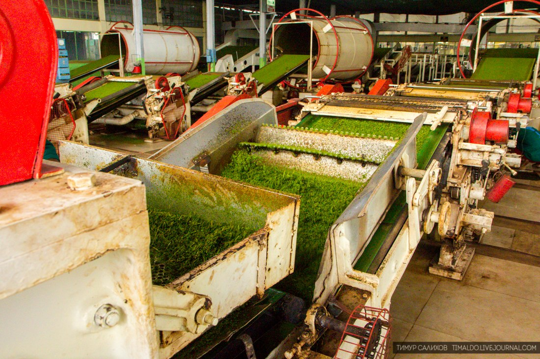Чайный бизнес, изготовление эксклюзивного чая своими руками - где и как заработать .ru