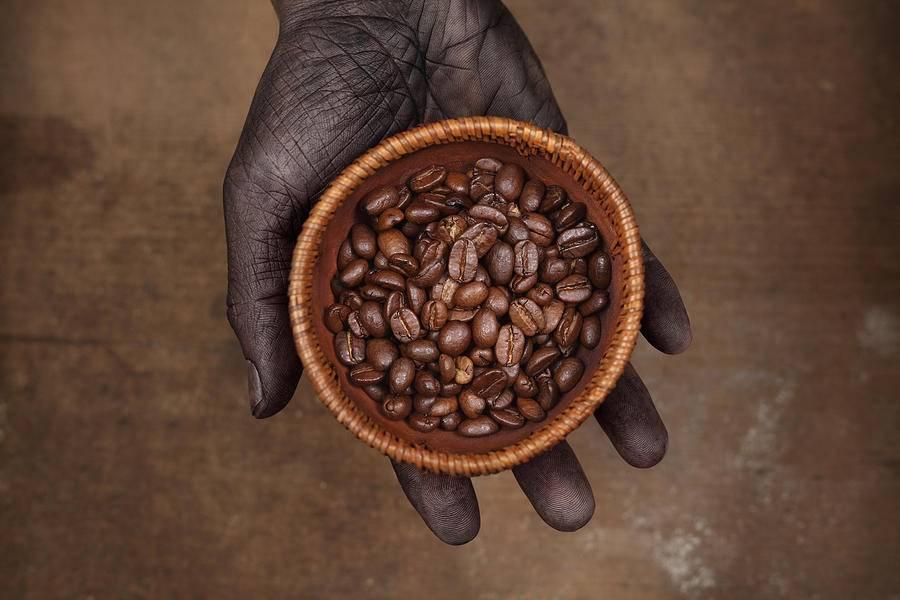 Кофе из кении: сорта, особенности