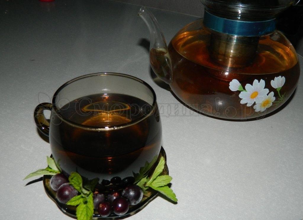 Отвар из листьев черной смородины: польза и противопоказания. применение и приготовление отвара - lechilka.com