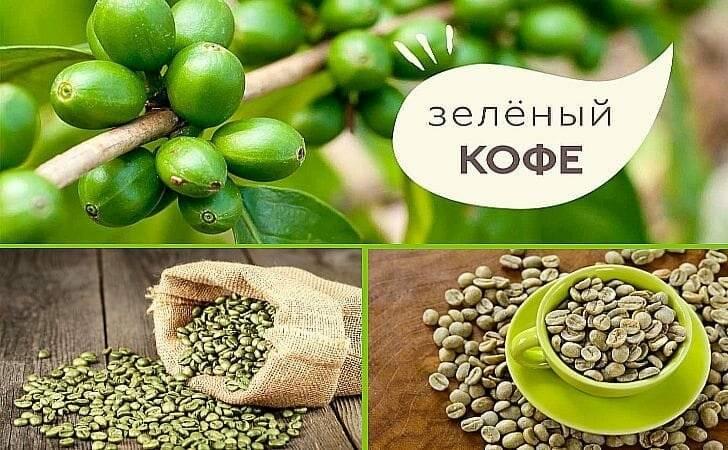 Действие зеленого кофе на организм. противопоказания, побочные эффекты и полезные свойства