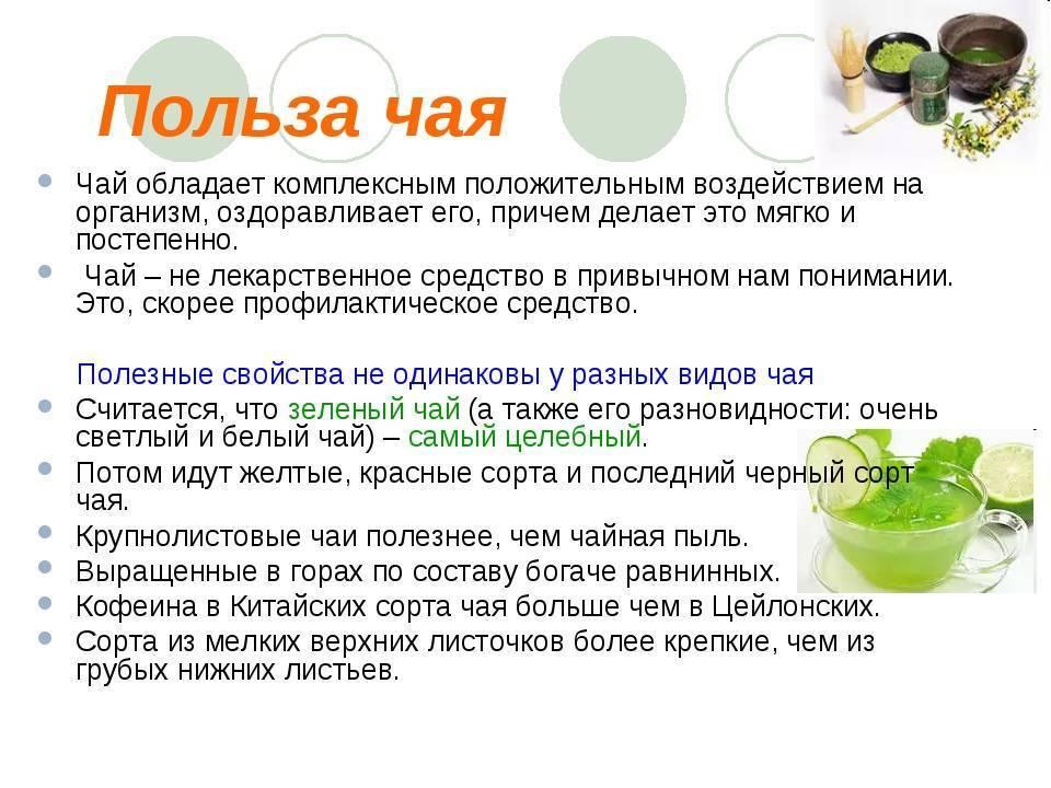 Зеленый чай для мужчин: состав, польза, вред, влияние на потенцию