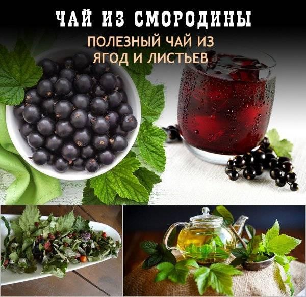 Польза и вред чая из листьев смородины: рецепты приготовления, как сделать