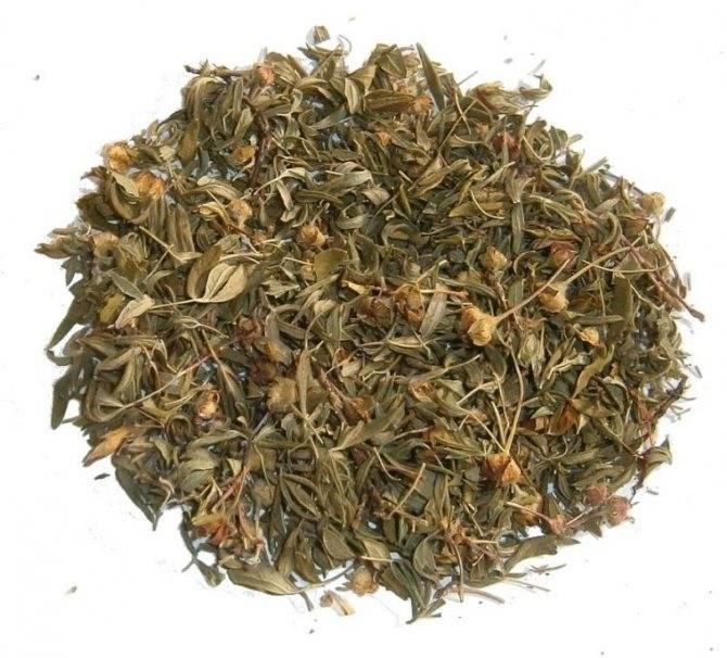 Кустарниковый курильский чай