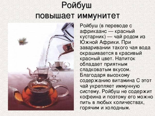 Как заваривать ройбуш: вкус ройбуша, чай ройбуш с молоком, с корицей, как пить ройбуш