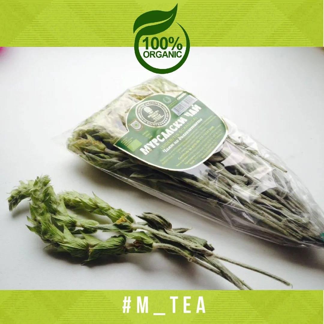Мурсальский чай — полезные свойства и противопоказания