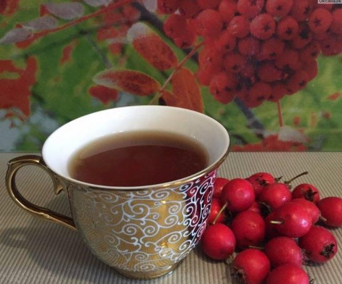 Полезные свойства чая из боярышника, как заваривать