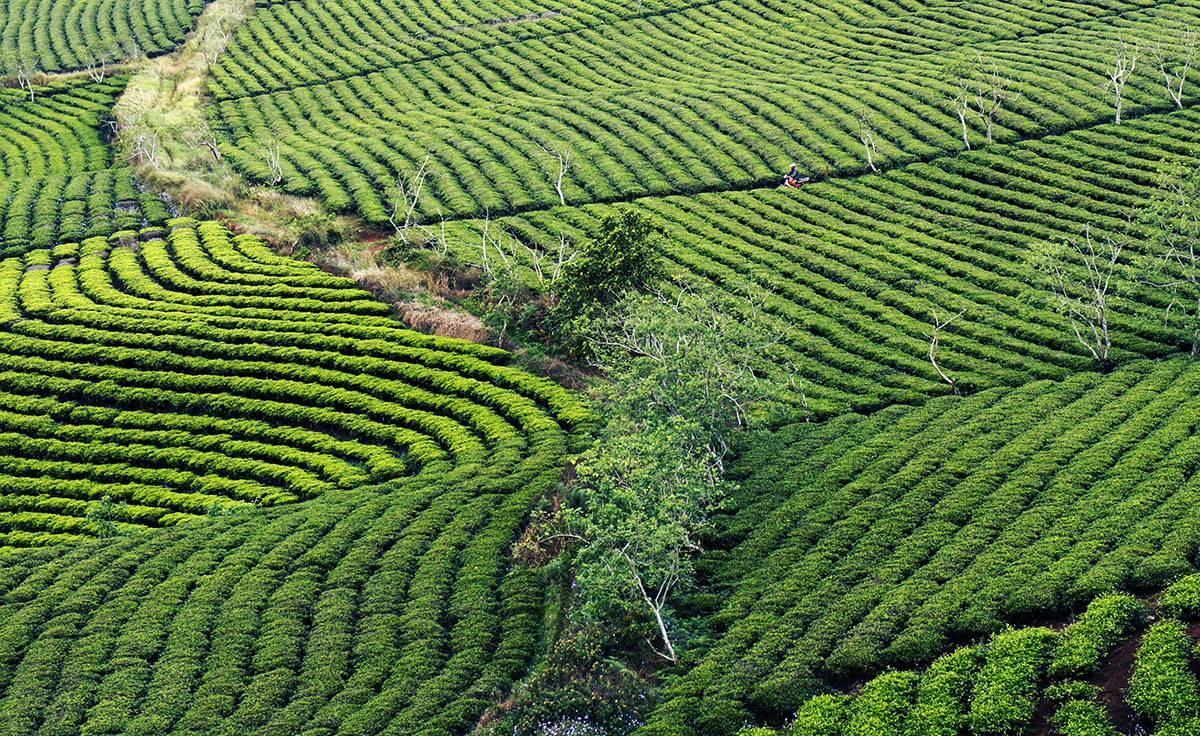 Кофе лювак во вьетнаме из помета животных: стоимость