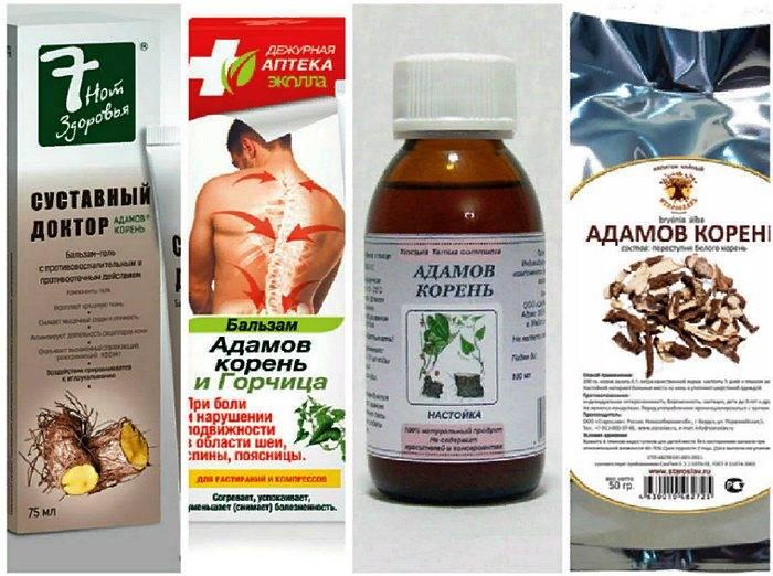 Адамов корень: лечебные свойства, применение в народной медицине, рецепты приготовления