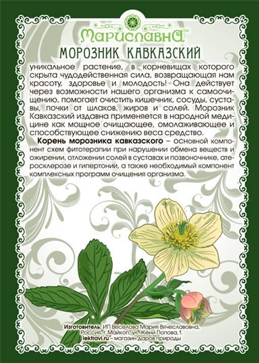 Морозник: описание и выращивание растения в саду