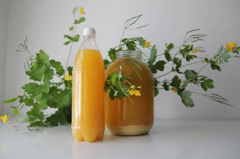 Ферментный квас болотова— лечебный напиток отболезней, рецепты
