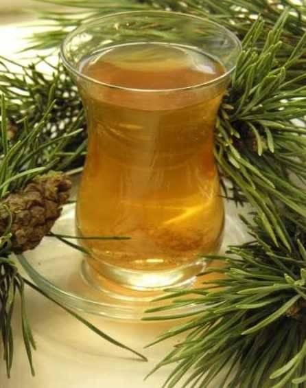 Чай из хвои. | здоровое питание
