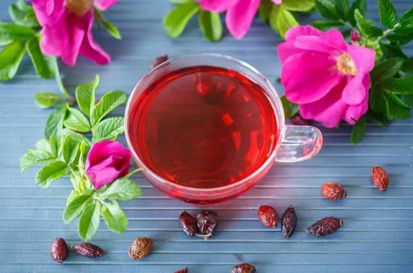 Чай из плодов и листьев шиповника