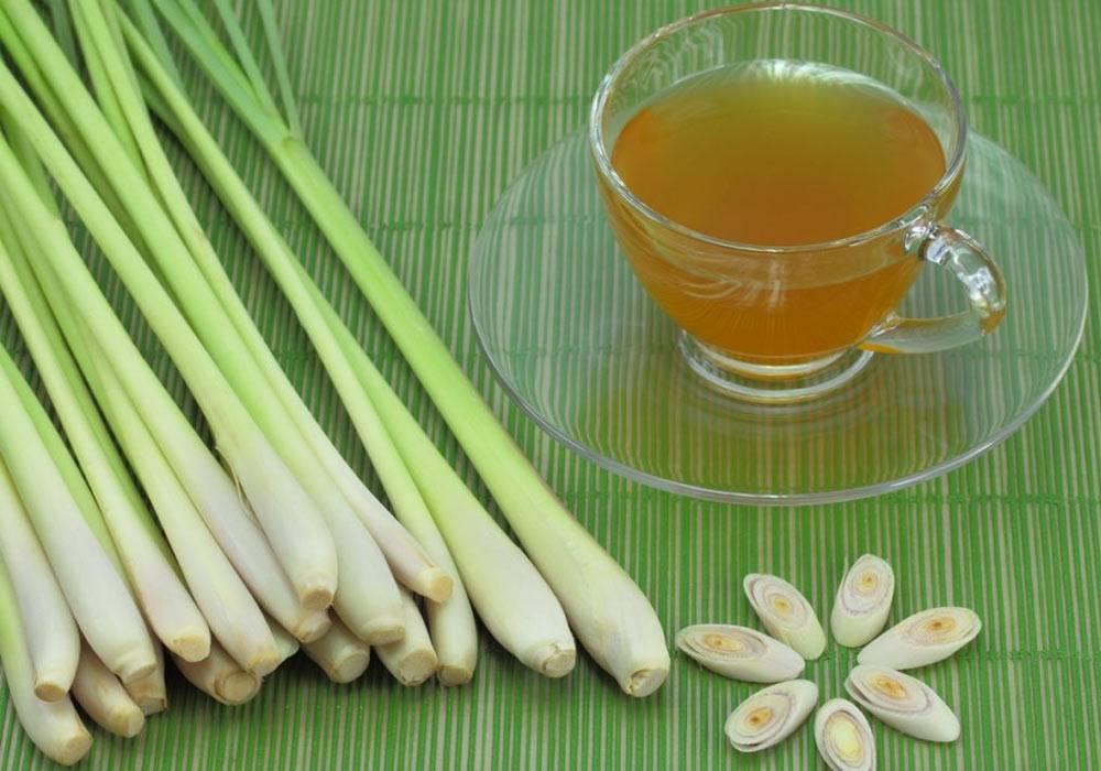 Лемонграсс – что это такое, чем пахнет: лечебные свойства и применение   справочник садовской