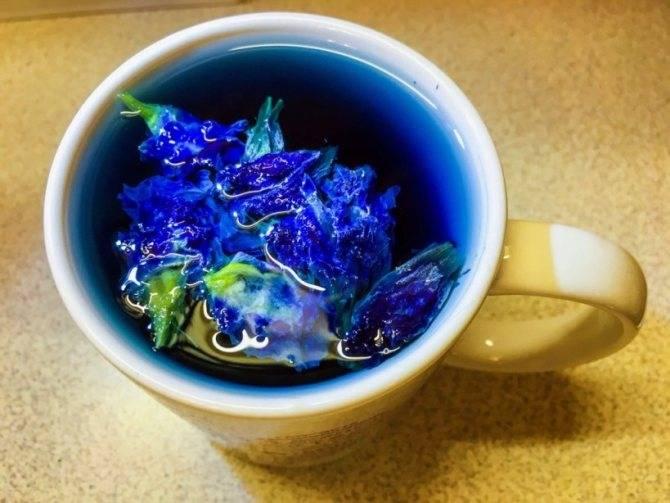 Синий чай: польза и вред, противопоказания