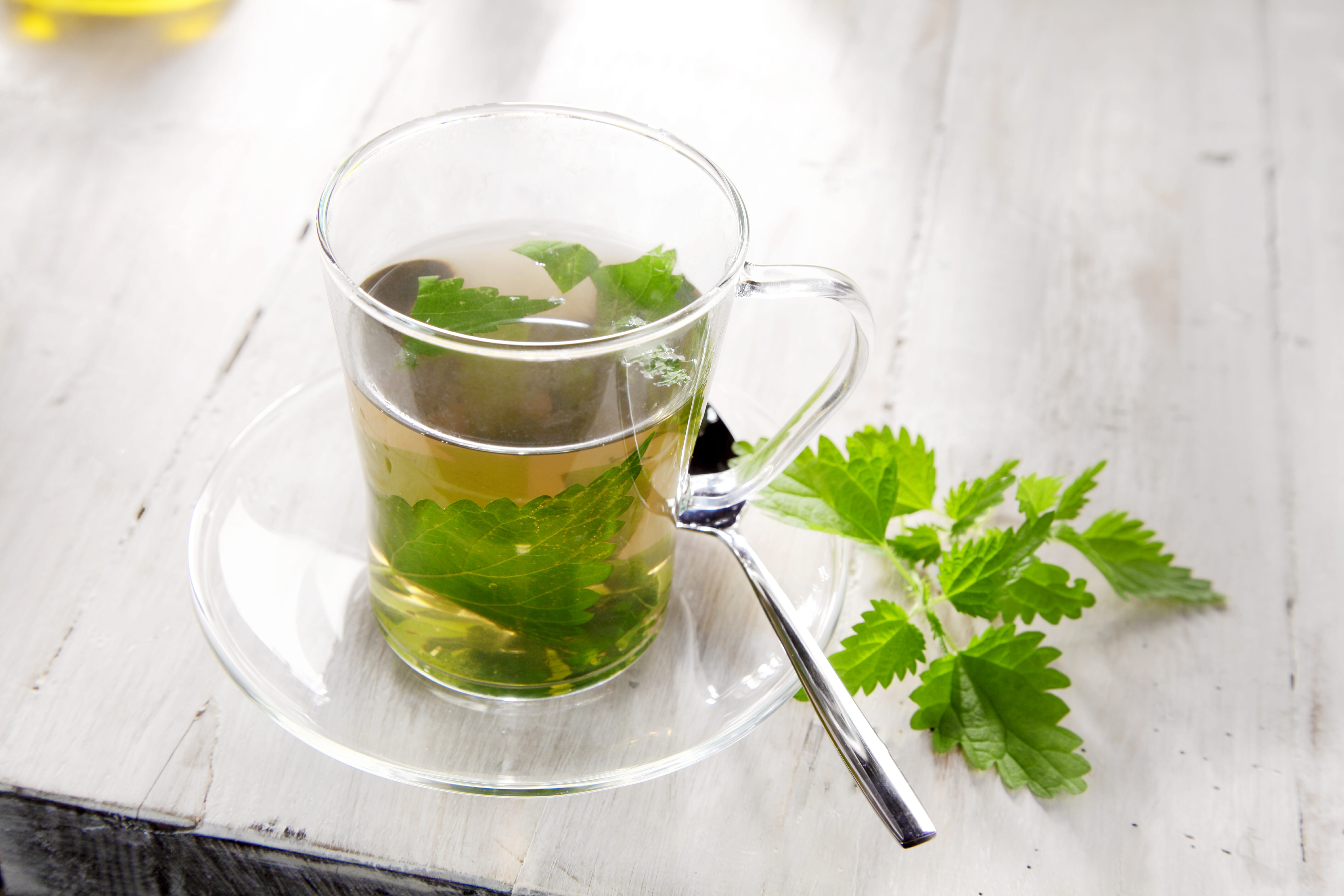Полезные свойства и вред чая из крапивы