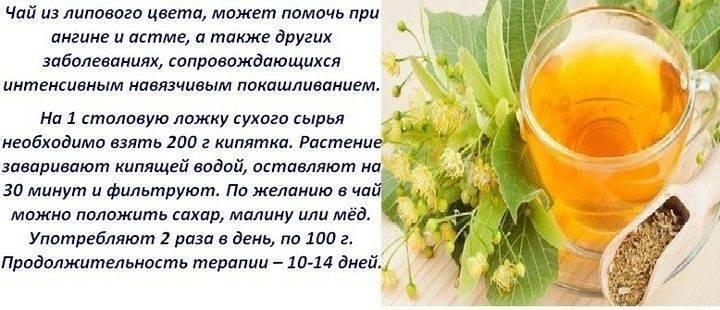 Польза липового чая и правила употребления