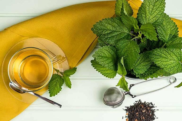 Зеленый чай с мелиссой | здоровый дом