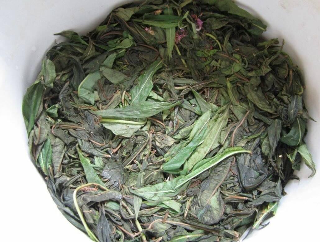 Как сушить иван чай
