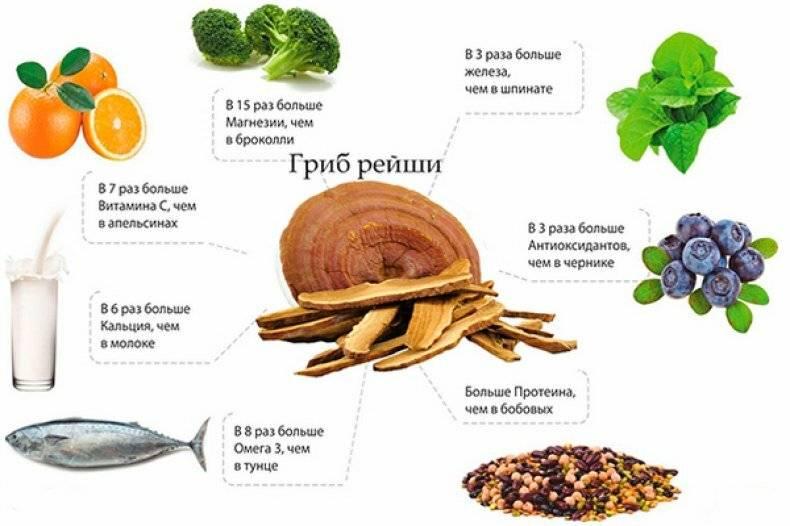 Гриб рейши - лечебные свойства и применение в настойках, экстракте или чая для лечения болезней
