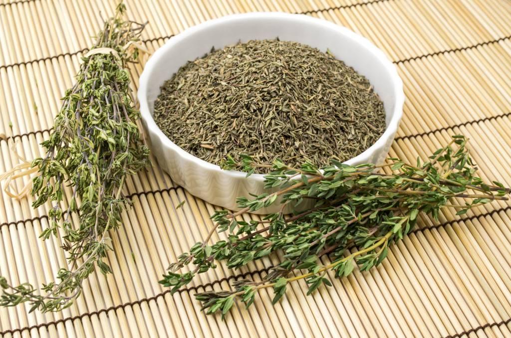 Вербена лекарственная – применение и противопоказания растения
