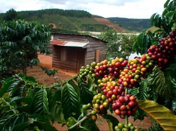 Всё о вьетнамском кофе: где купить кофе в нячанге и какой кофе выбрать   отдых во вьетнаме, лучший вьетнамский кофе, оптовые поставки кофе, crazy shop нячанг