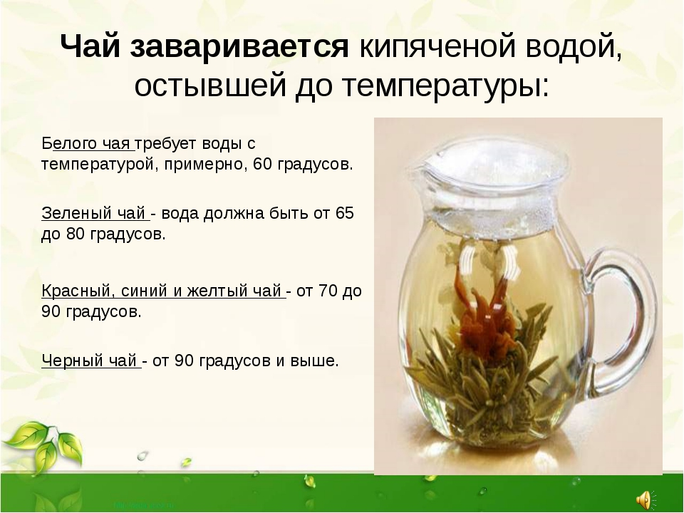 Тайский синий чай анчан: полезные свойства, секреты заваривания