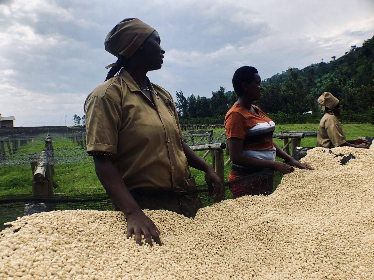 Производство кофе: перечень оборудования, описание технологии изготовления, нюансы организации дела