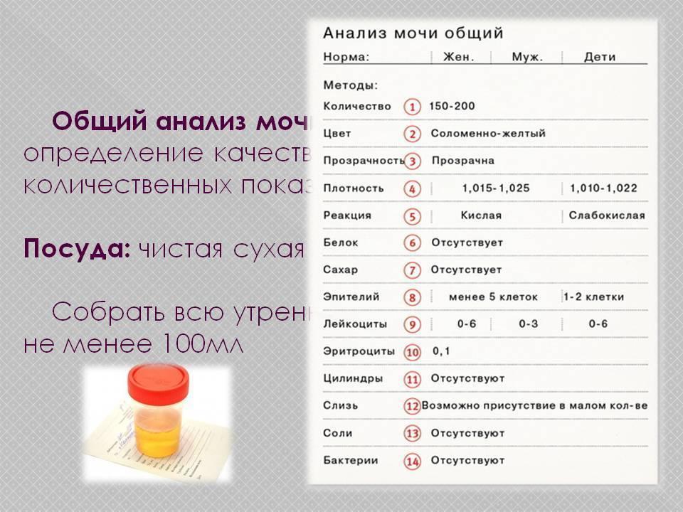 Диета перед сдачей крови: разрешенные и запрещенные продукты, особенности и нюансы