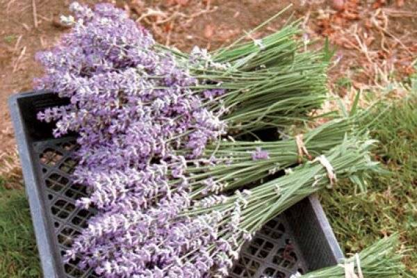 Сушеные травы: 41 рецепт заготовок на зиму » сусеки