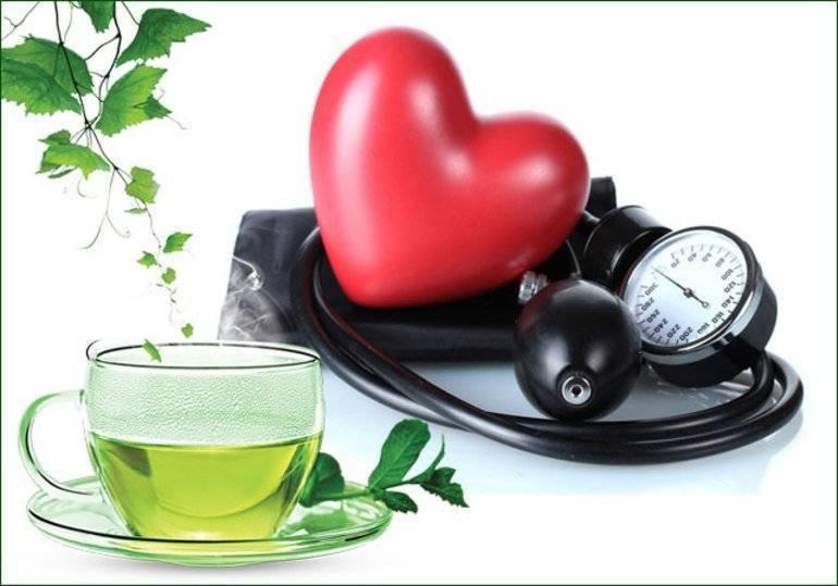 Зеленый чай повышает или понижает давление: польза и вред для организма, правила употребления, способ заварки, побочные действия