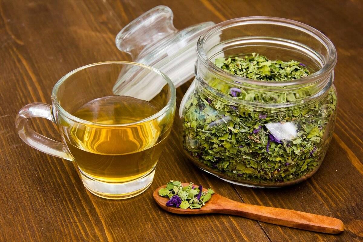 Чай из крапивы: полезные свойства и противопоказания