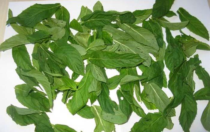 Чай с мелиссой, как приготовить. чем полезен чай с мелиссой. в статье рассказано о пользе мелиссы и даны рецепты чая на основе этой ароматного растения.